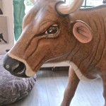 Kuh Frieda nach der Verjüngungskur