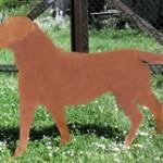 Labrador 139,-